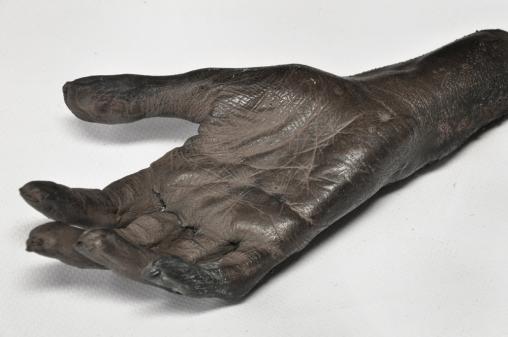 Museum_Wetenschap_20130415_BeNN (75)