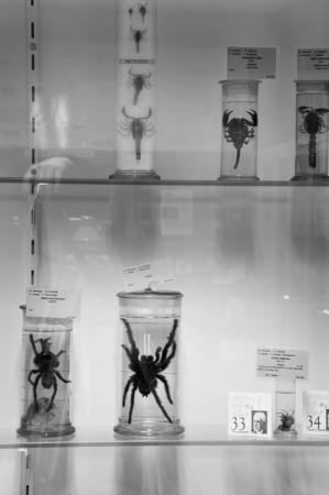 Museum_Dierkunde_fotoBeNN_20130430 (17)
