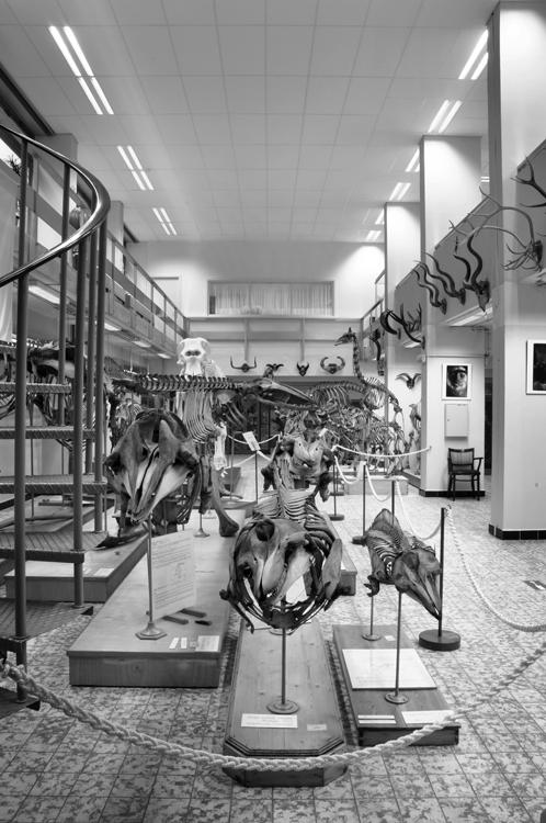Museum_Dierkunde_fotoBeNN_20130430 (37)