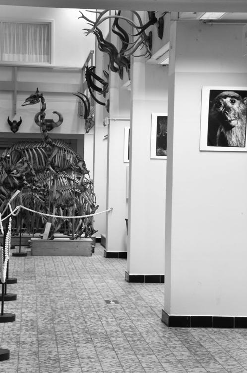 Museum_Dierkunde_fotoBeNN_20130430 (50)