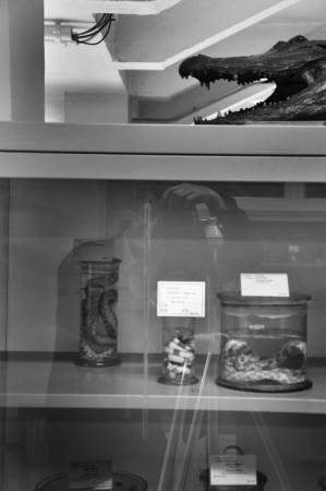 Museum_Dierkunde_fotoBeNN_20130430 (81)