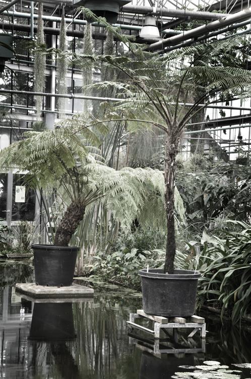 Plantentuin_fotoBeNN_20130430 (15)