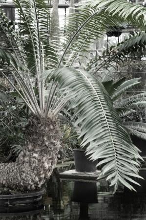 Plantentuin_fotoBeNN_20130430 (16)