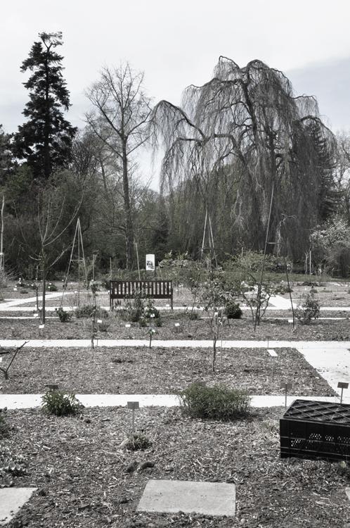 Plantentuin_fotoBeNN_20130430 (91)